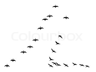 silhouettes flock geese isolated on white background