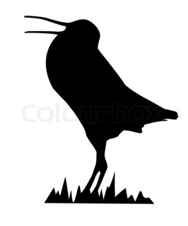 drawing snipe isolated on white background