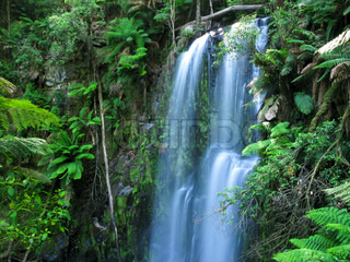 medium sized water fall in a rain forest in australia