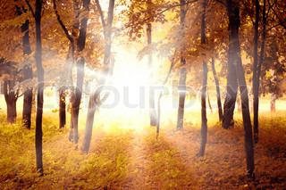 Beautiful autumn forest and bright morning sun