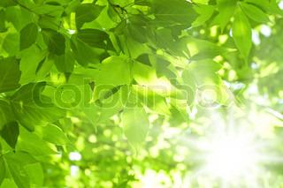 Smukke grønne blade og klare sol