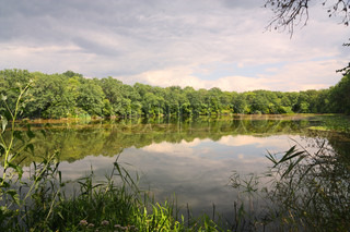 Natural landscape, a pond surrounded by forest