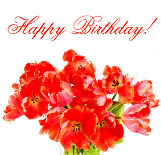 red tulips. happy birthday! card concept