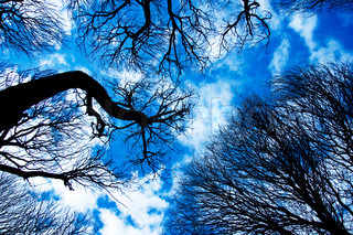 Branches of trees against the blue sky