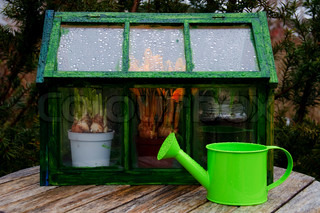A mini greenhouse and a watering can outside in a garden on a rainy day