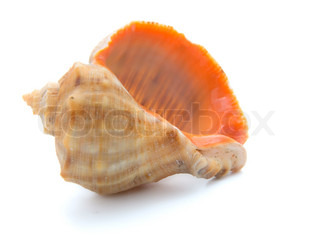 cockle-shell  isolated on white