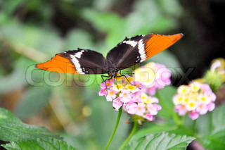 close-up photo of a  butterfly on a purple-blue butterfly bush.