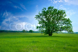 tree on green field, the blue sky and white clouds