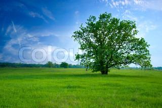 træ på green field , den blå himmel og hvide skyer