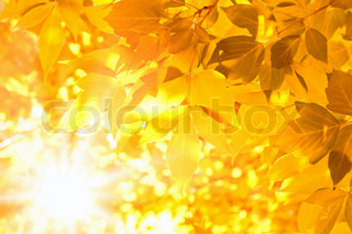Yellow leaves, bright sunshine, season fall
