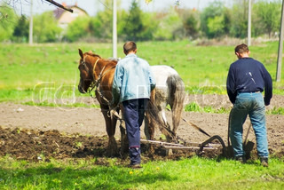 Two peasants plow the fields with horses