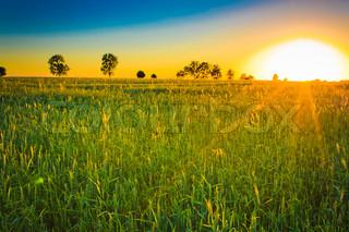 Landbrugsprodukter planter på marken med sollys
