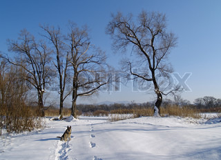 A winter landscape on coast of the river with a dog