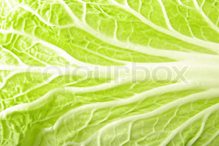 Close up of chenese cabbage fresh leaf