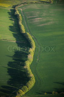 hedgerows and fields