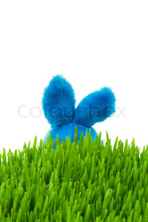 Easter bunny and green grass on white