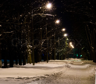 Night park's alley under the snow illuminated