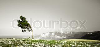 Lonely træ bøjning i vinden