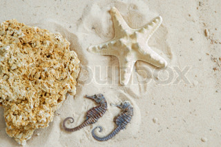 Starfish, hippocampus and coquina rock on sand background
