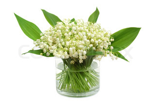 Bunch of lily of the valley on white background
