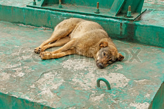 Rambling dog lying on the reinforced concrete industrial object