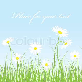 Cute camomile floral background. Colorful vector illustration