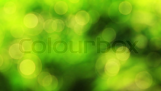 Nice green nature foliage bokeh from spring forest