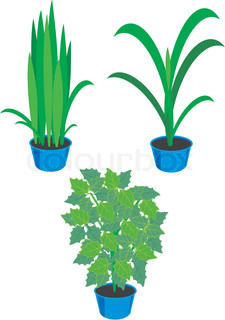 Set of house plants in dark blue pots - the isolated vector illustrations.
