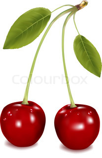 Two cherries against white background. Vector.