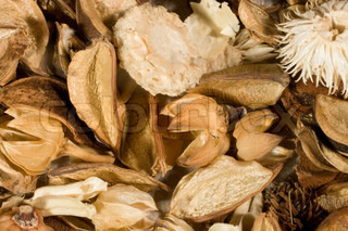 Dried flowers and leaves (as an autumn background)