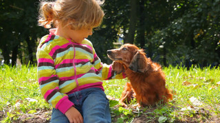 little girl stroking dog in park, hiding dog