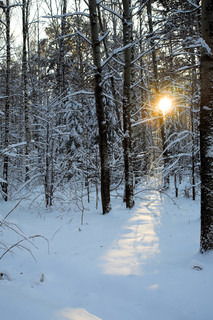 sunny day in the snow-covered winter forest