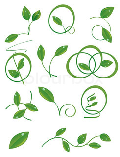 A set of green leaves to the design. Vector illustration