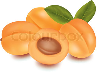 Photo-realistic vector illustration of the ripe apricots fruit.