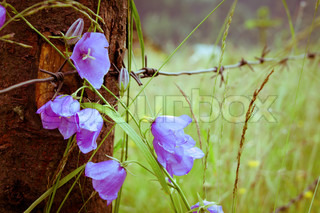 rock fence with wire and a flower bell