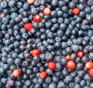 Colourful berries background. Forest blueberries and wild strawberries