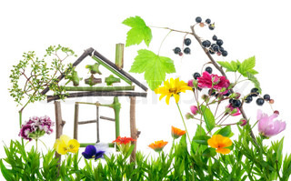 Collage from summer flowers and plants - the sweet green home  concept isolated. Tomorrow flowers will wither