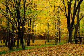 Autumnal forest with trees and bench
