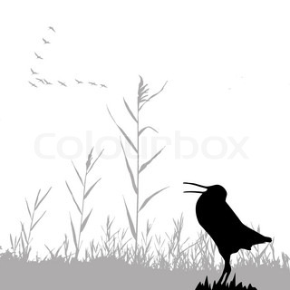 silhouette of the snipe