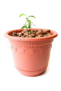 Baby plant in small flower pot. Isolated on white background