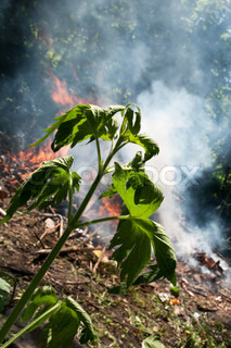 fire in the forest, danger in the environment