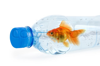 Close up of bottle with drinking water and swiming there gold fish isolated on white