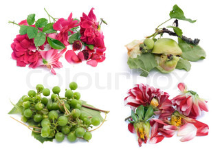 Crushed broken flowers and fruit collage- broken life concept. Isolated