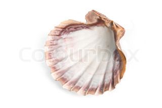 sea shell  isolated over white background