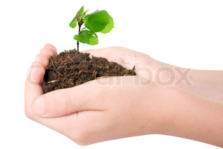 Image of 'protection, growth, hands'