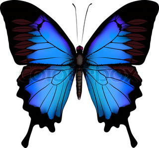 blau Schmetterling Papilio Ulysses (Mountain Swallowtail) isoliert Vektor auf weißem Hintergrund