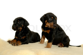Two sweet puppie dogs on a white background.