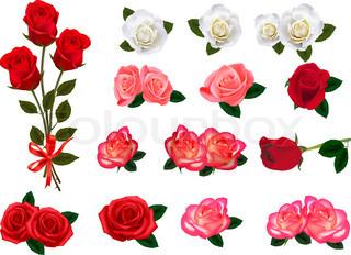 Big sæt af en smuk roser.