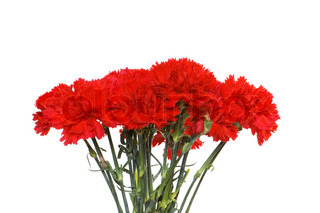 Many carnations isolated on the white background