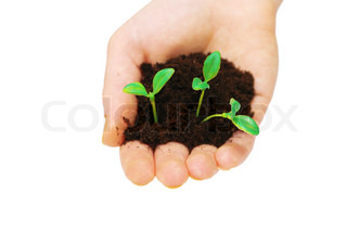 Hands holding seedlings isolated on white background